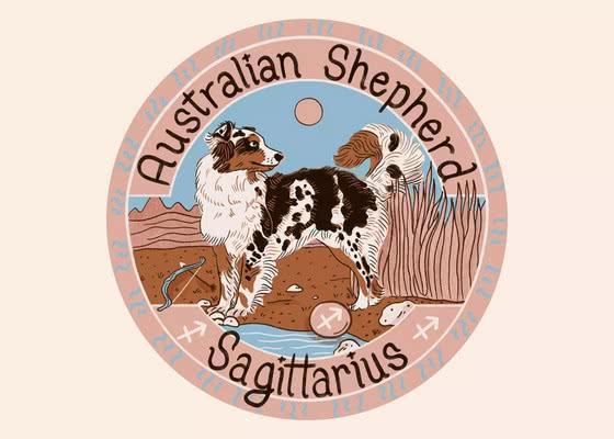 Австралийская овчарка для Стрельца (22 ноября-21 декабря); Ваша собака по знаку зодиака