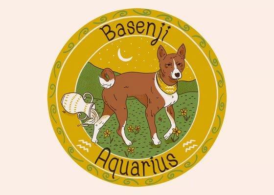 Басенджи для Водолея (20 января - 18 февраля); Ваша собака по знаку зодиака