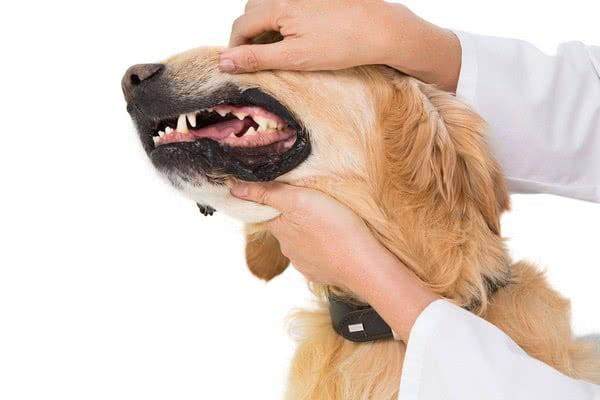 Проблемы с деснами у собак