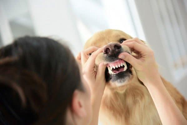 Лечение проблем с деснами у собак