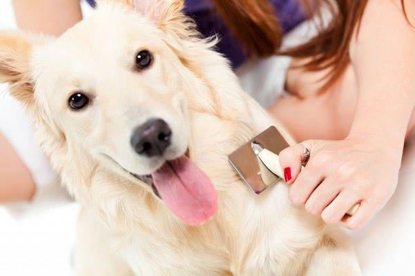 Эффективная борьба с кровососами; Как избавиться от блох у собаки