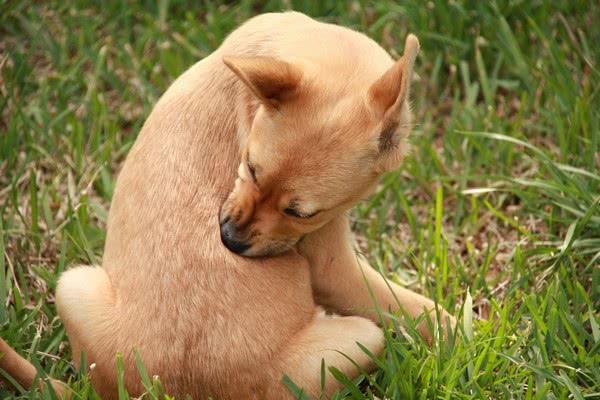 Пятна «черного перца» на домашних животных