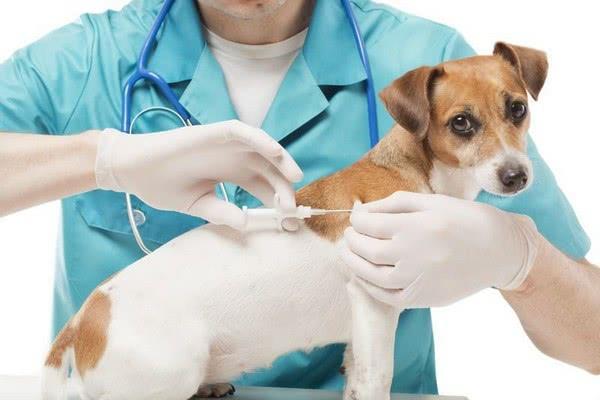 Меры профилактики появления паразитов у собак; Паразиты у собак