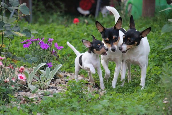 Отрицательные черты характера собак