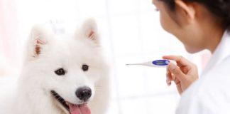 Как измерить температуру тела щенка
