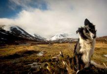 Лучшие породы собак для пеших прогулок и восхождения на горы