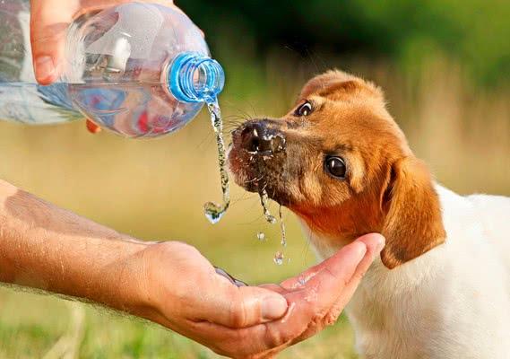 Лечение; Тепловой удар у собаки