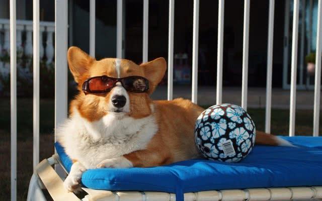 Ключ к успеху – это профилактика; Тепловой удар у собаки