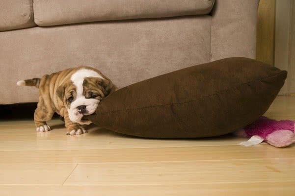 Как сделать так, чтобы собака перестала грызть вещи?