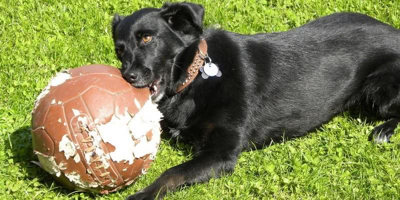 Физические занятия с собакой; Что делать, если ваш щенок грызет всё подряд