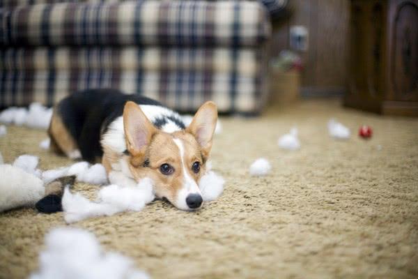 Подготовка дома к приезду щенка; Как ухаживать за щенком