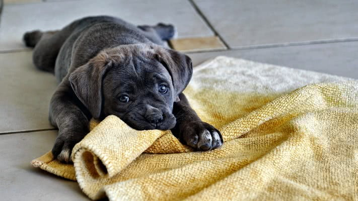Приучение щенка к туалету; Как ухаживать за щенком