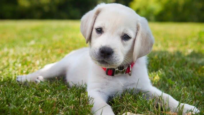 Выбор имени для щенка