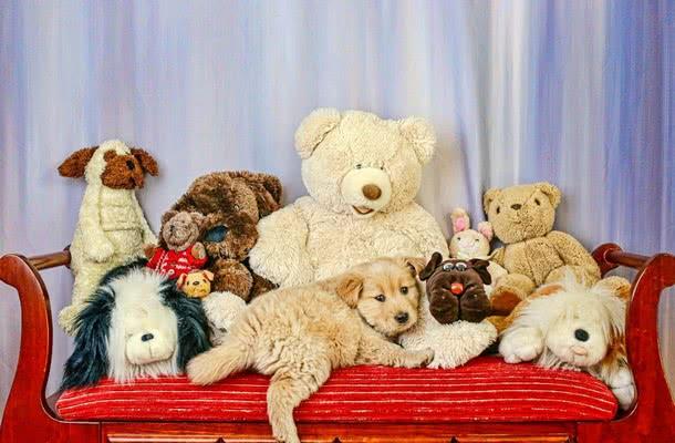 Что обязательно надо купить щенку; Как ухаживать за щенком