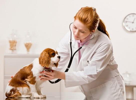 Прививки щенка