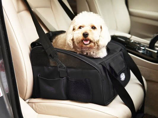 Ограничьте свободу передвижения собаки в машине