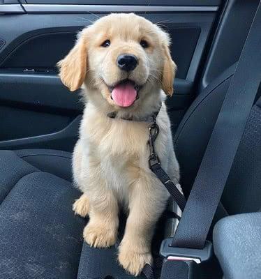 Сидите спокойно в машине