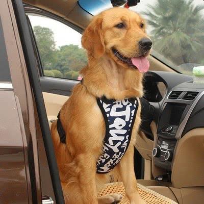 Безопасность на первом месте; как перевозить щенка в машине
