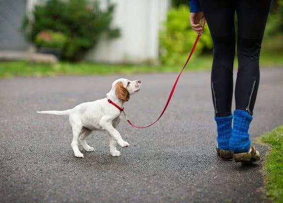 Как теряются щенки
