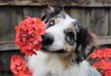 Цветочные клички для собак