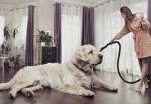 Чистота в доме, если с вами живёт собака