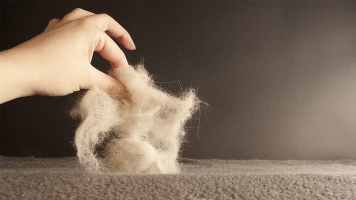 Не бойтесь шерсти домашних животных; Чистота в доме