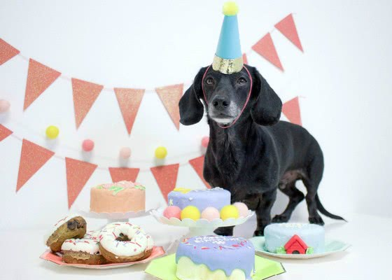 10 отличных идей для празднования Дня рождения вашей собаки