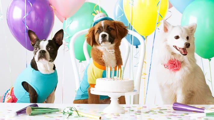 Нарядите своего питомца для вечеринки; Идеи для празднования Дня рождения вашей собаки