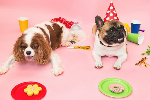 Сделайте подарки гостям; Идеи для празднования Дня рождения вашей собаки