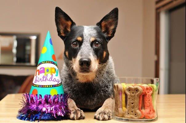 Выберите самый лучший подарок; Идеи для празднования Дня рождения вашей собаки