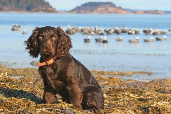foto 15 09 1 - Лучшие породы собак, которые обожают плавать