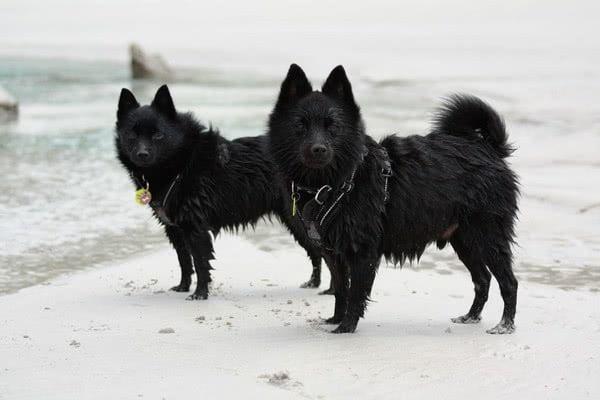 foto 15 10 1 - Лучшие породы собак, которые обожают плавать