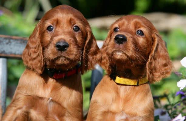 foto 15 11 1 - Лучшие породы собак, которые обожают плавать