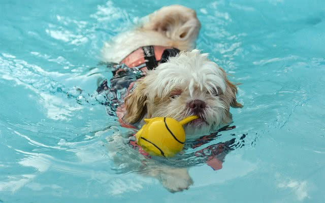 foto 15 13 1 - Лучшие породы собак, которые обожают плавать
