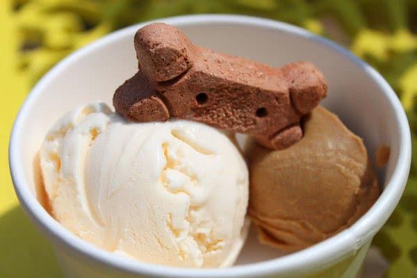 Как безопасно дать мороженое собаке; Можно ли давать собакам мороженое?