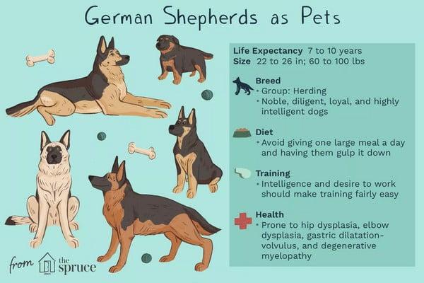 Немецкая овчарка; Достоинства породы