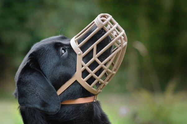Все о намордниках для собак; Зачем собаке намордник?