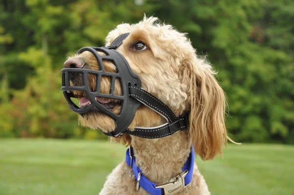 Все о намордниках для собак; Намордники-корзинки
