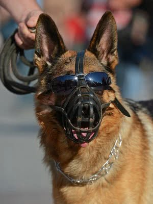 Все о намордниках для собак; Наказание