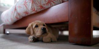 Десять распространенных страхов и фобий у собак