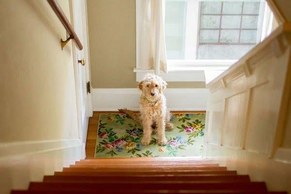 Страх подниматься и спускаться по лестнице
