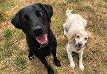 6 причин, почему две собаки лучше, чем одна