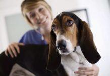 10 распространенных проблем со здоровьем собак