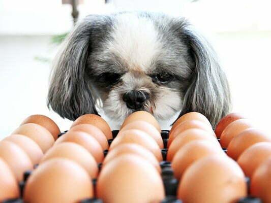 Опасность яиц для собак