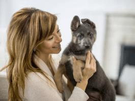 Как сделать свой дом безопасным для щенка
