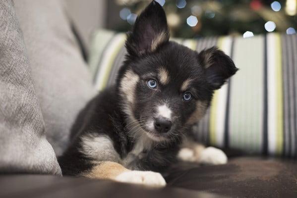 Шаги к безопасному для щенка дому
