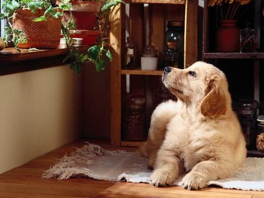 В пределах досягаемости щенка окажутся низкие предметы