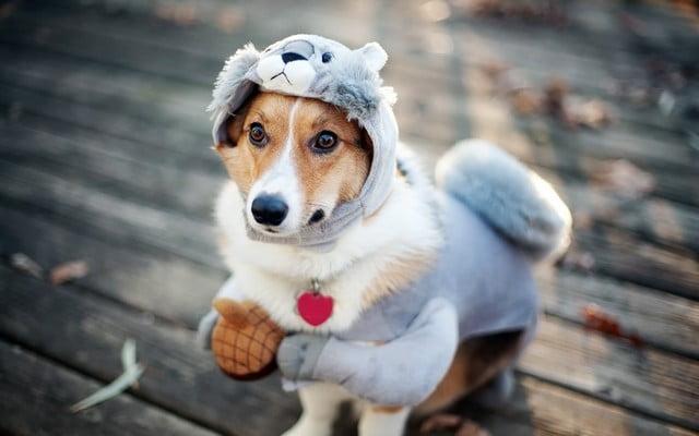Ошейники; Как правильно снять мерки с собаки