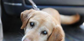 Как ухаживать за слепой собакой