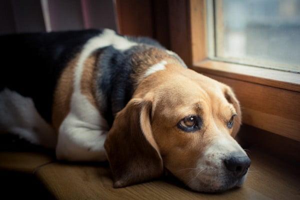 Симптомы вздутия живота у собак
